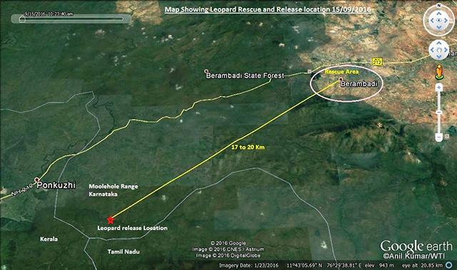16-09-2016-mvs-bandipur-maddur-leopard-release_map-001