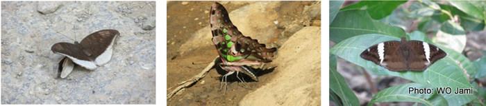 butterfly-final-12