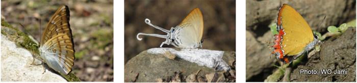 butterfly-final-2-001