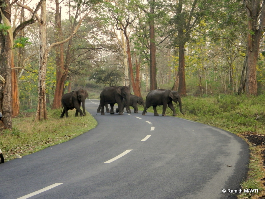 elephants-in-thirunelli-kudrakote-corridor_photos-ramith-m-wti-001