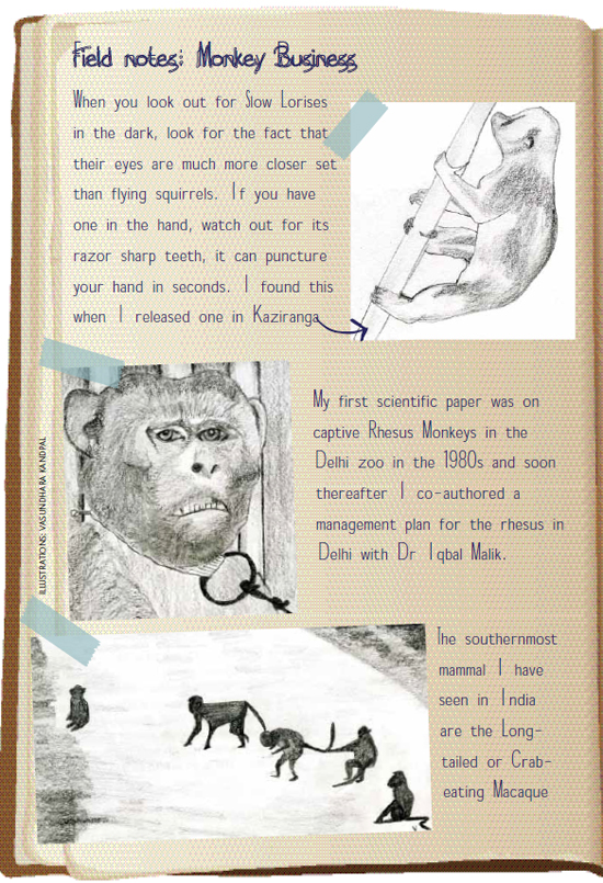 primate_blog_website